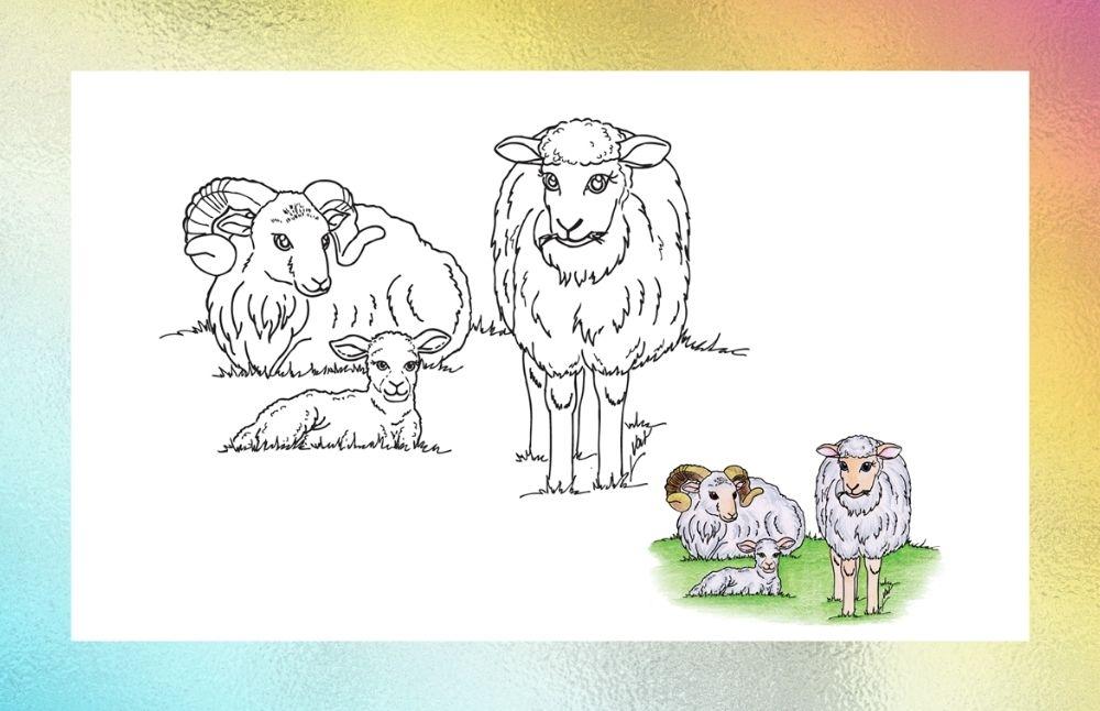 Banner - omalovánky - ovce